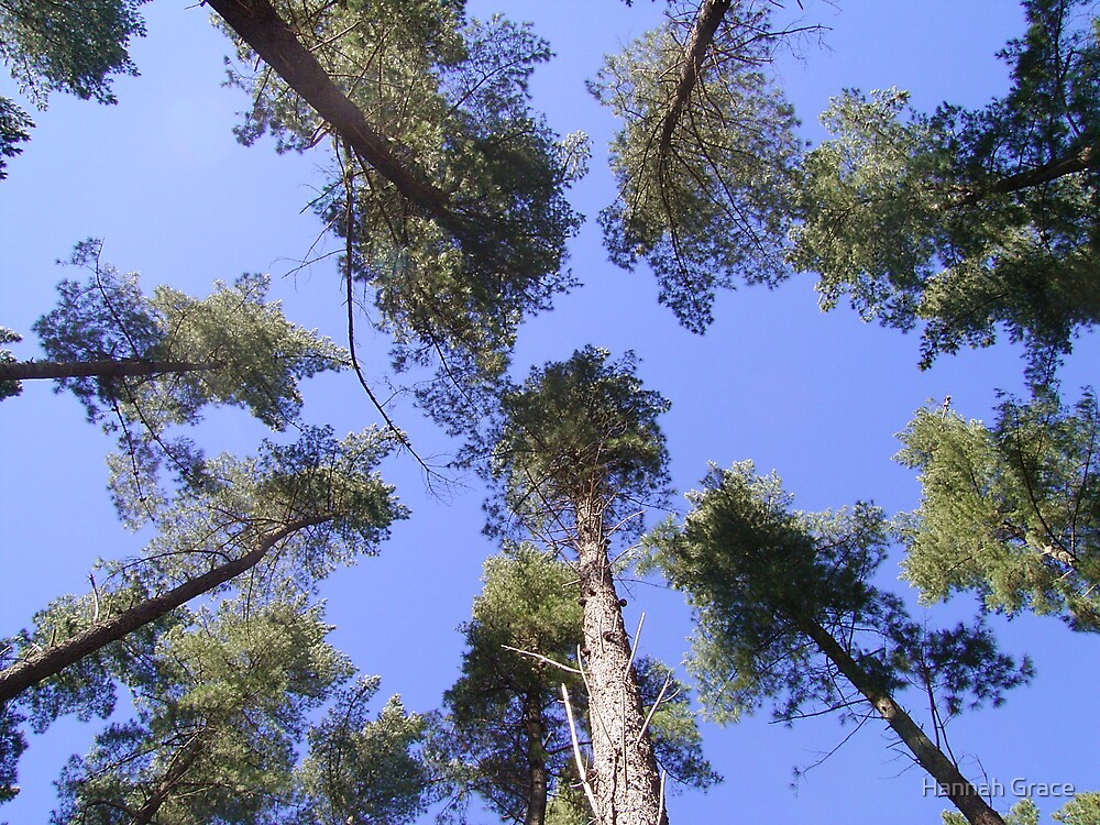 Tree Tops by Hannah Grace