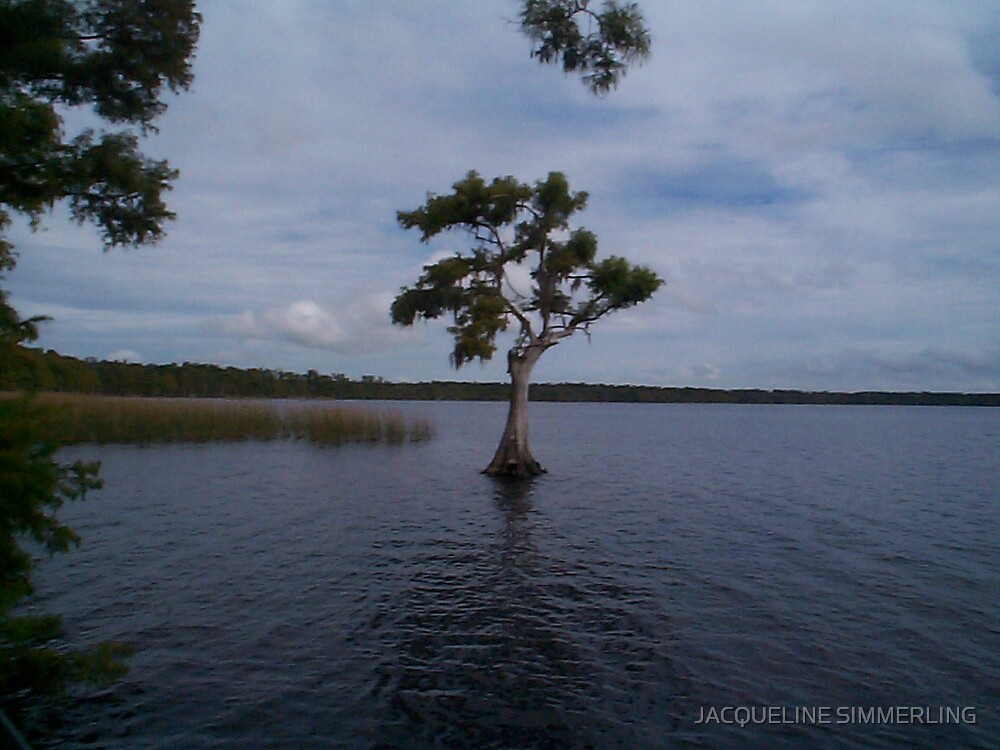 lonely tree by JACQUELINE SIMMERLING