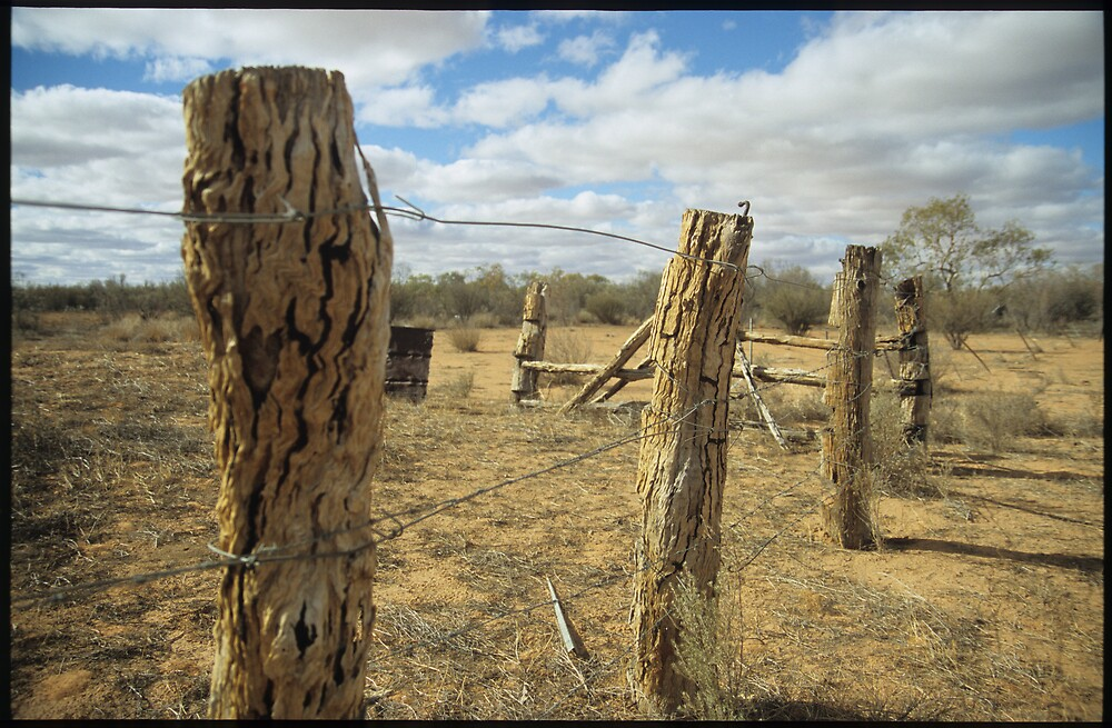 Old Fence, Mt Dare by Bronwyn  Murphy