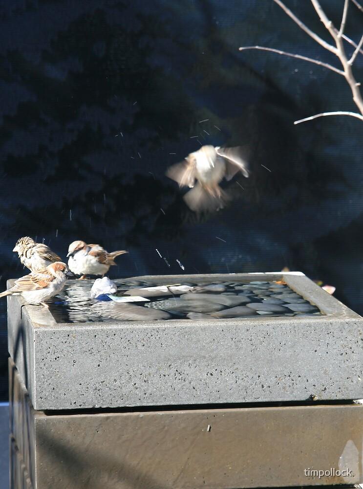 Bird Bath by timpollock
