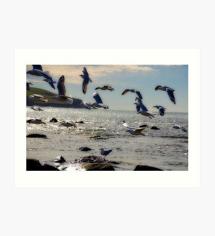 Gulls in Flight Art Print