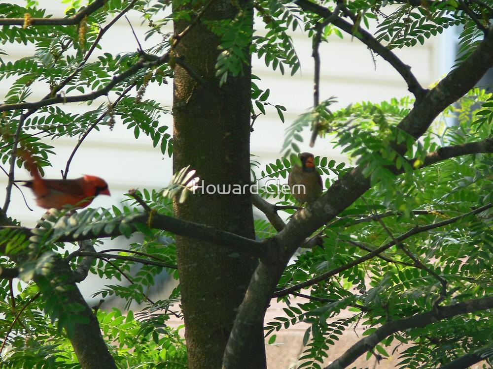 Wild Birds by Howard Clem