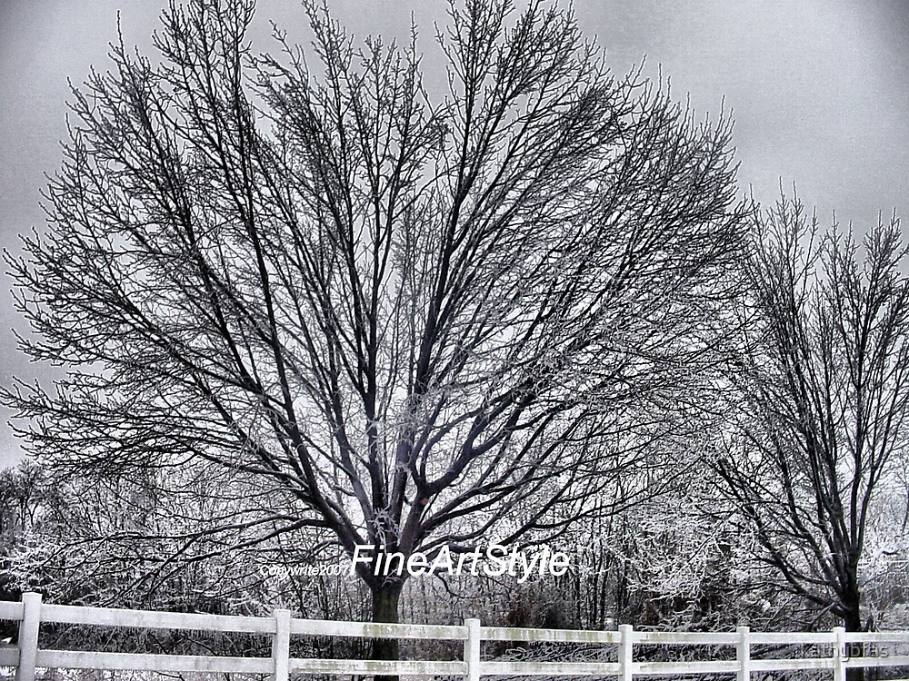 A Winter Morning by kathybfas