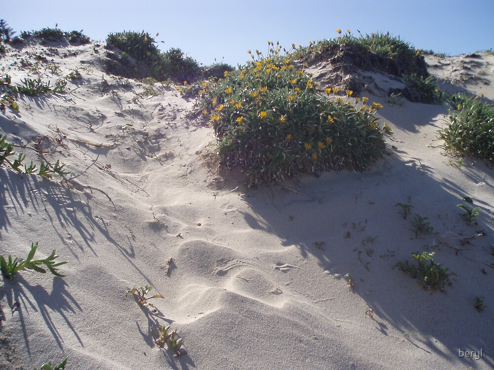Sand Hill by Beryl Withnell