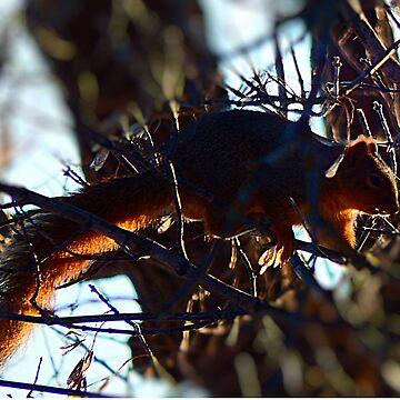 Sqirrel in Tree by NicoleK-design