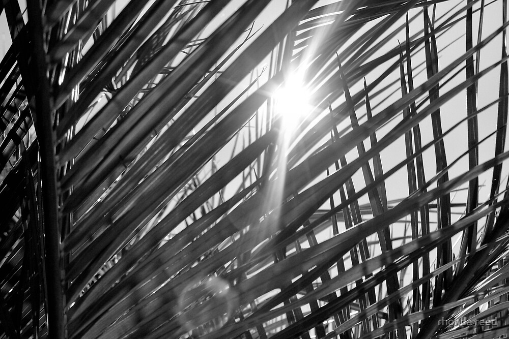 Palm Fronds by rhonda reed