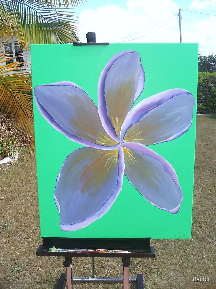 A lone flower in a garden by dachli