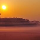 Golden dawn by snapitnc