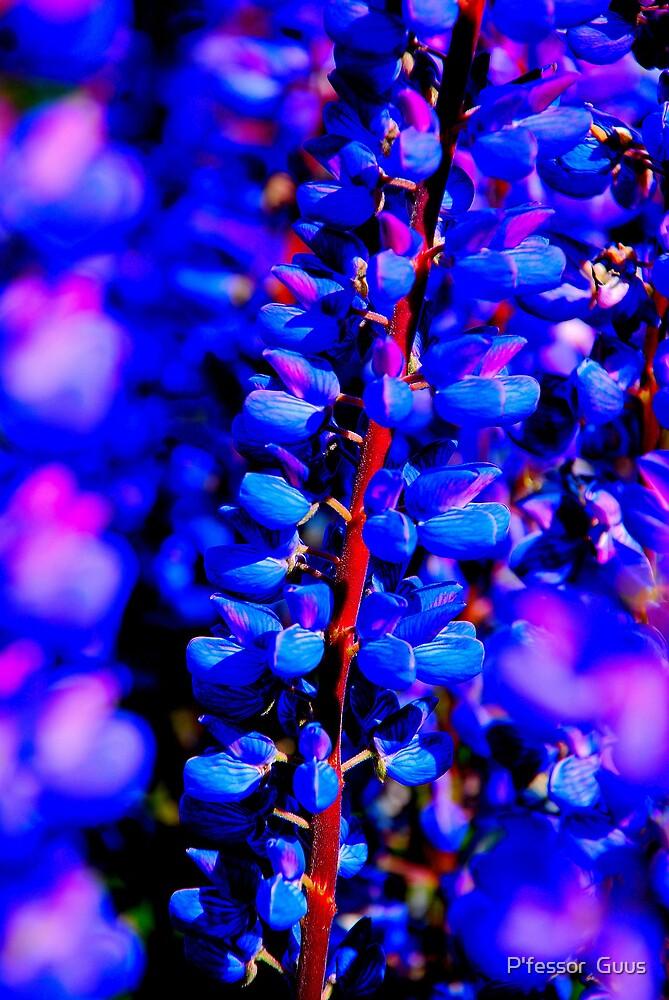 Lake Tekapo Flowers by P'fessor  Guus