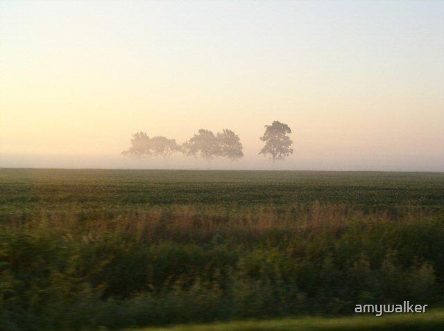 Field of fog by amywalker