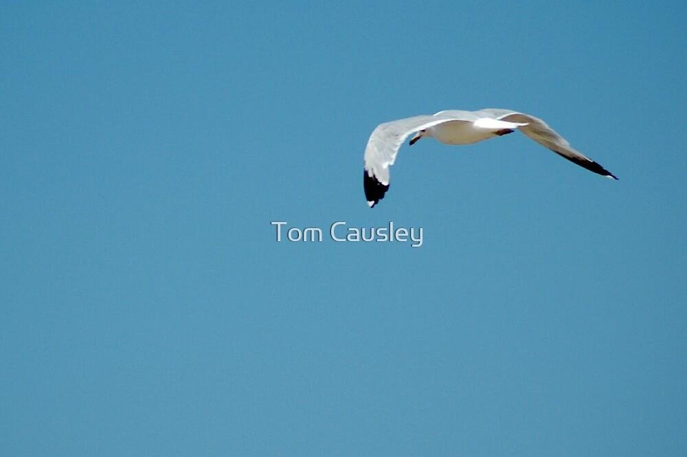 Flight by Tom Causley