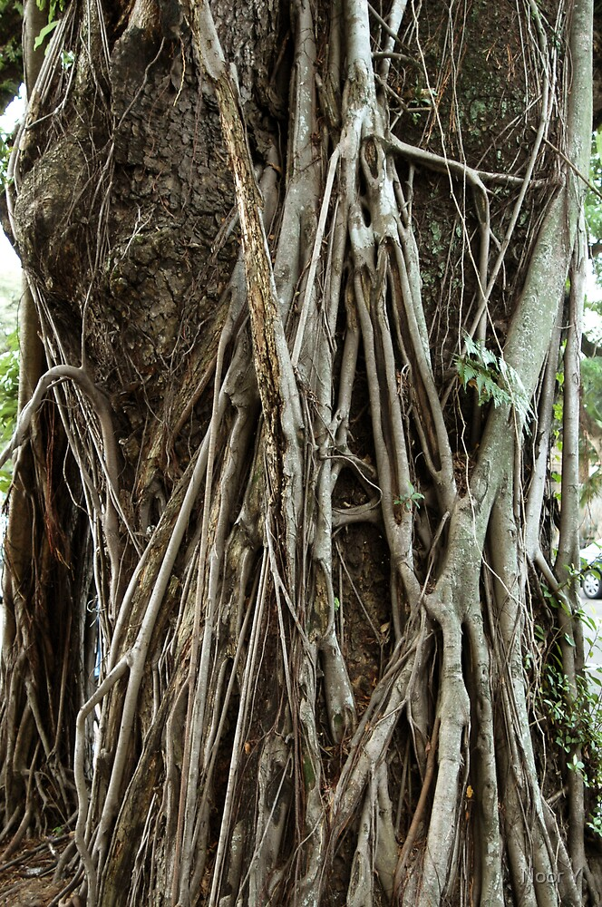 Roots by Noor Y