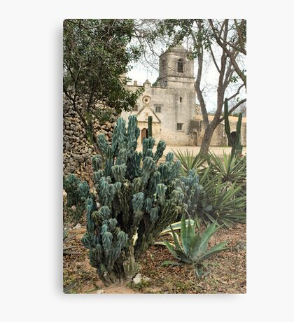 Cactus With Concepcion in Back Ground Metal Print