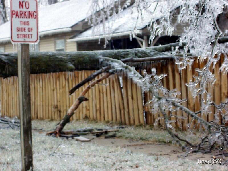Tree on fence by headj80
