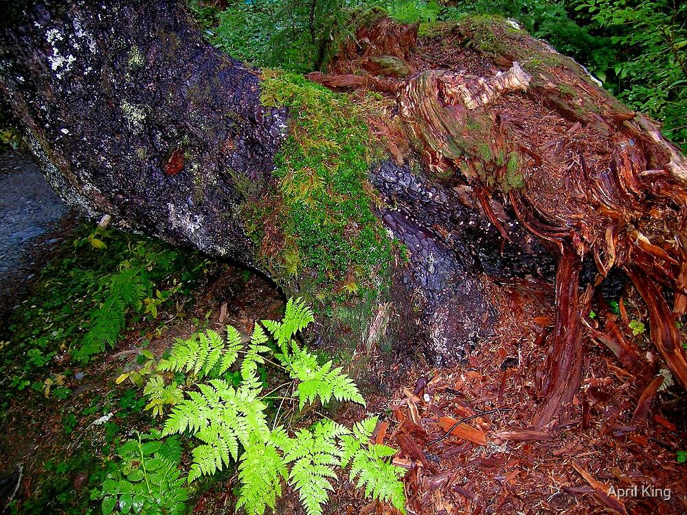 Close up tree Alaska by April King