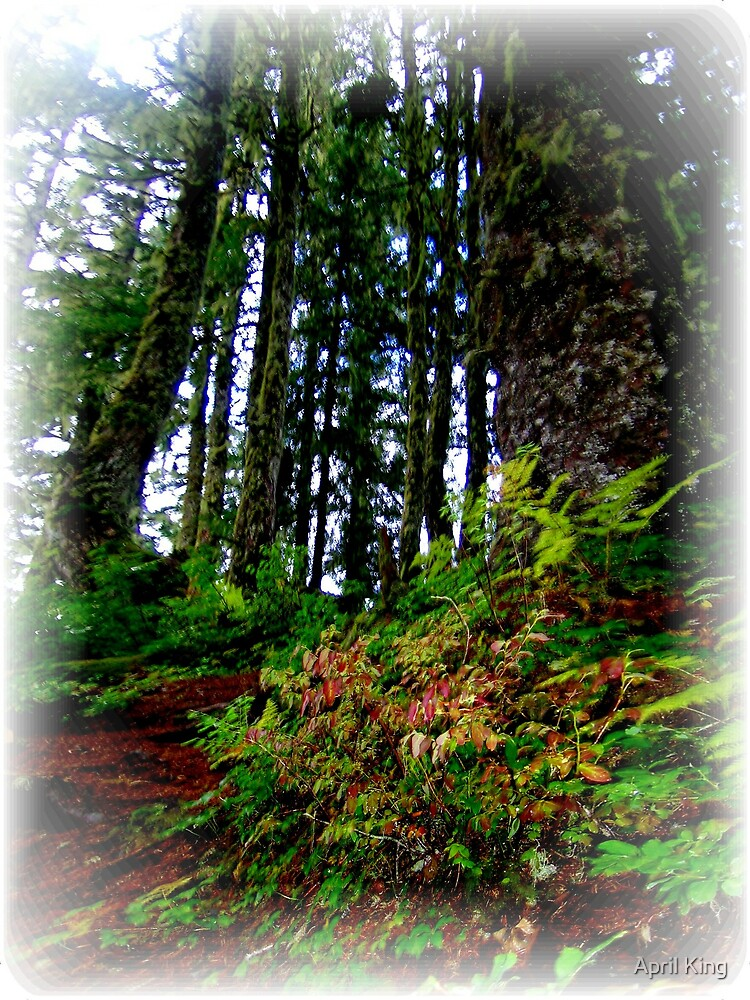Mt Roberts Trees by April King