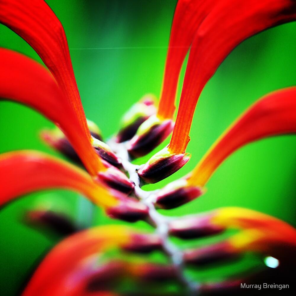 Alien Flower by Murray Breingan
