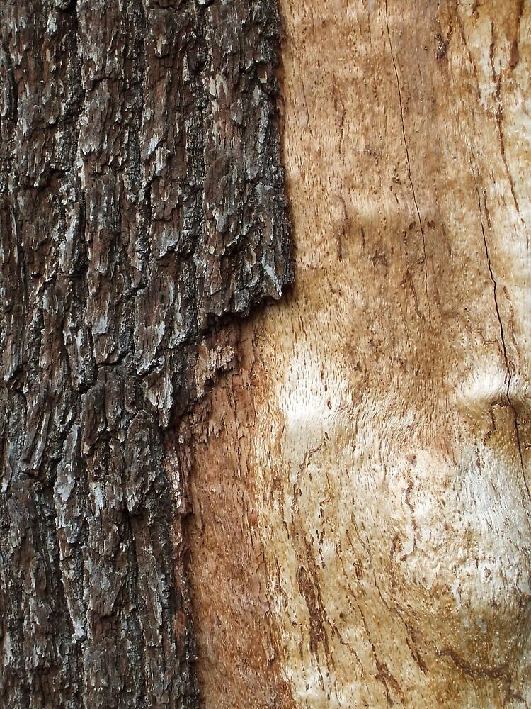 The Tree Man of Richmond Park by Mattyf