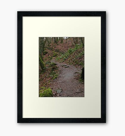 Up the woodland path Framed Print