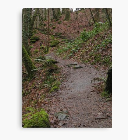 Up the woodland path Canvas Print