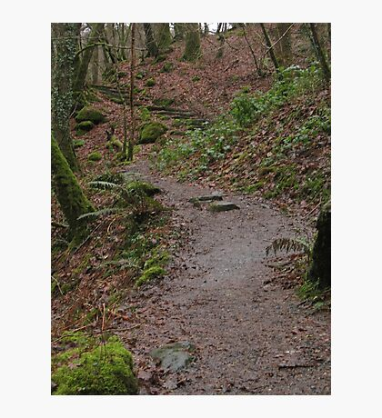 Up the woodland path Photographic Print