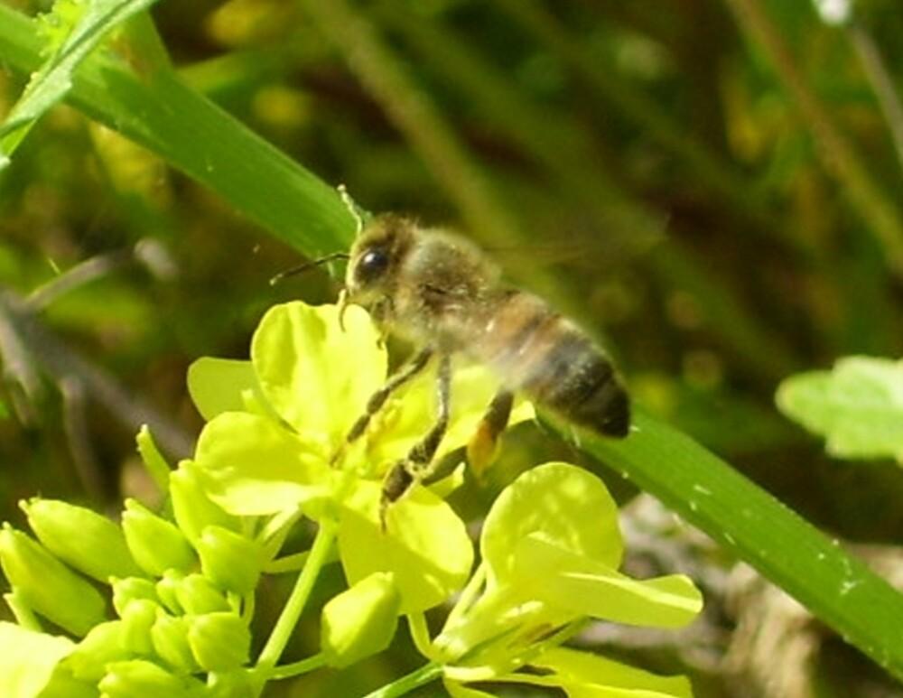 Bee-Attitudes by aline