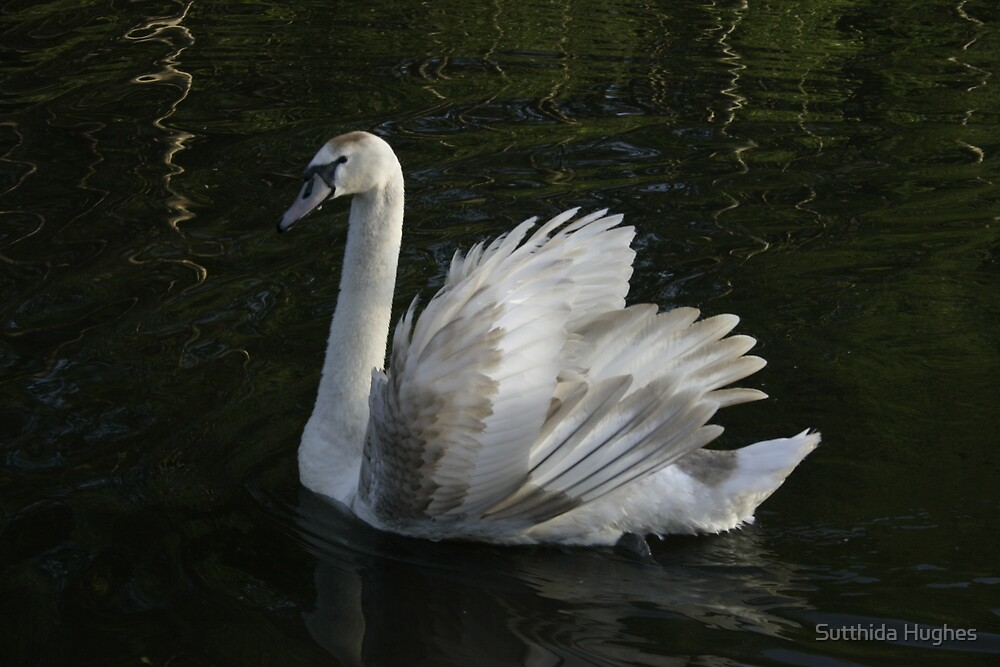 Swan No3 by Sutthida Hughes