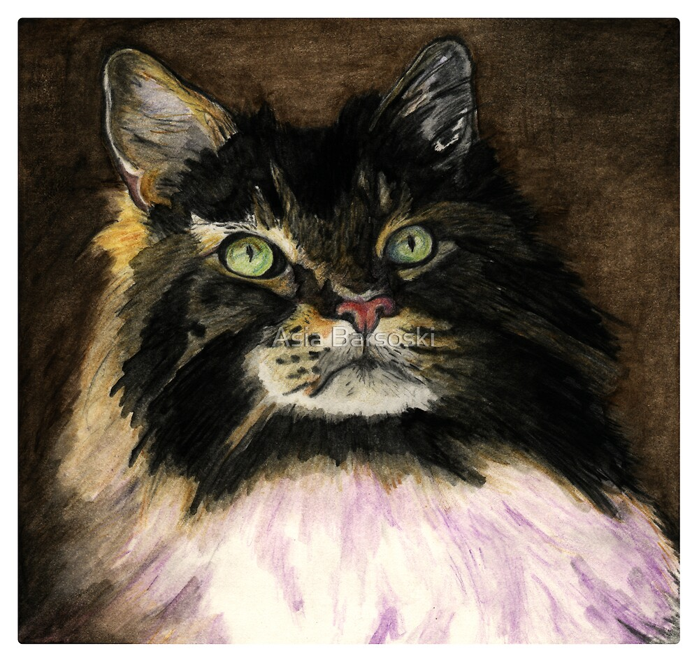 Maincoon cat by Asia Barsoski