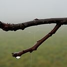 Revelation....A foggy day in the country  by jammingene