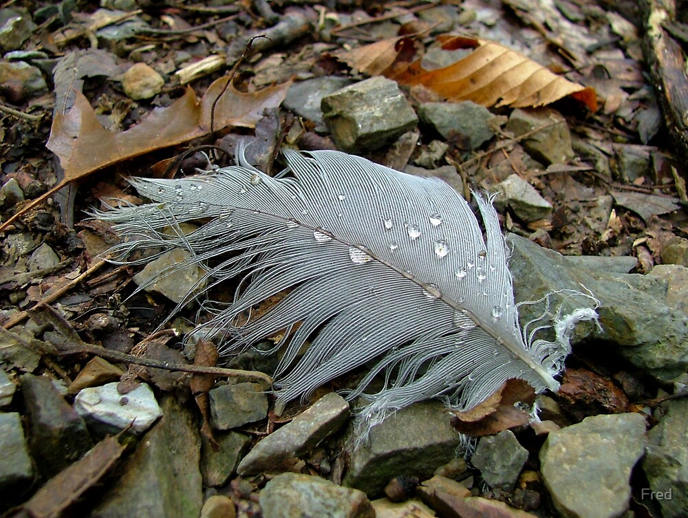 Rain Plumage  by Fred