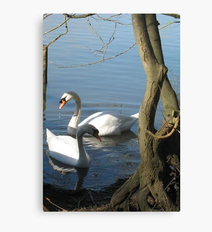 Swan pair Canvas Print