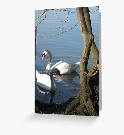 Swan pair Greeting Card