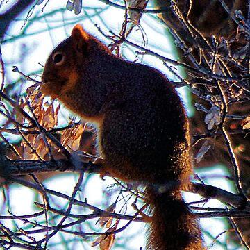 Squirrel in Tree eating by NicoleK-design