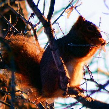 Squirrel bathed in Sunshine by NicoleK-design