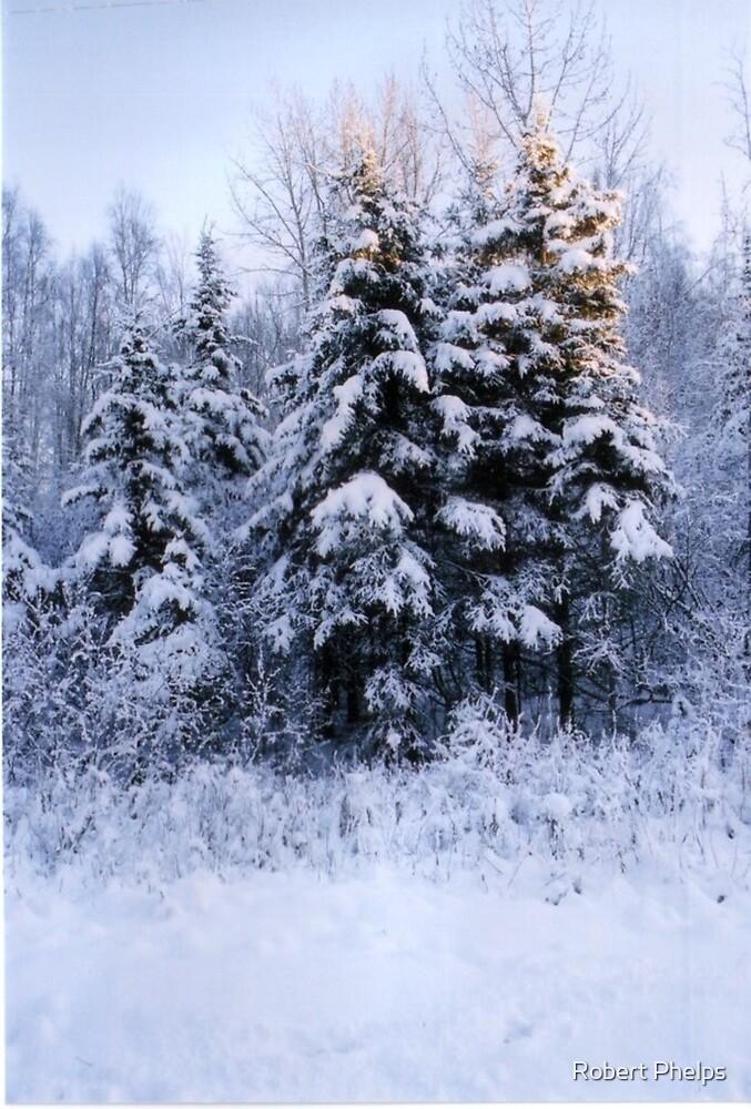 Winter wonderland by Robert Phelps