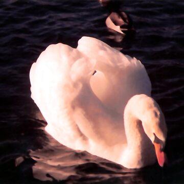 swan by louiser