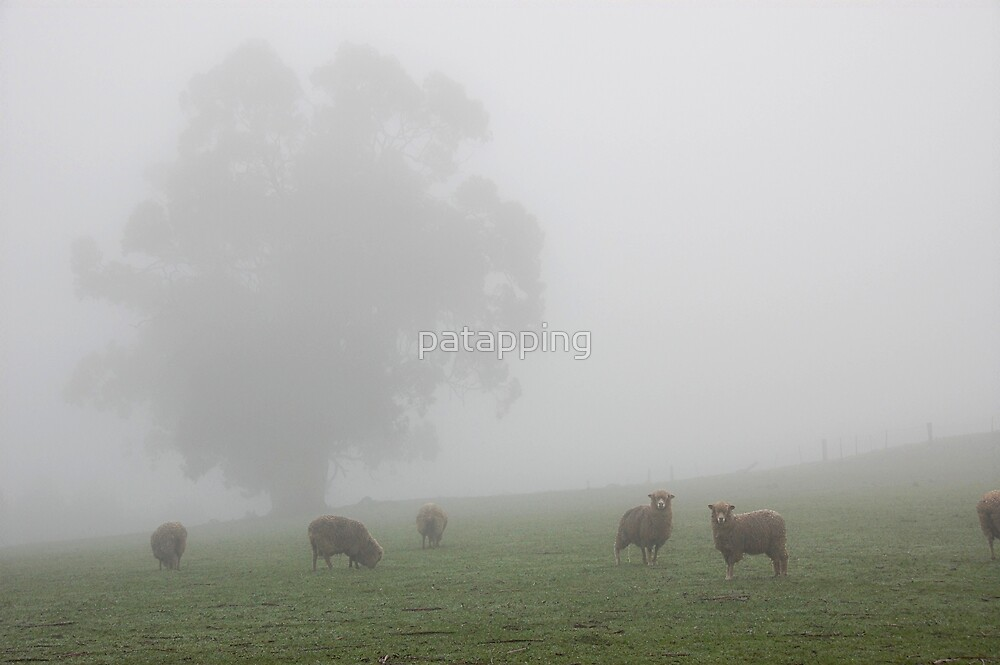 Misty Morning - One Tree Hill, Sth Aust. by patapping