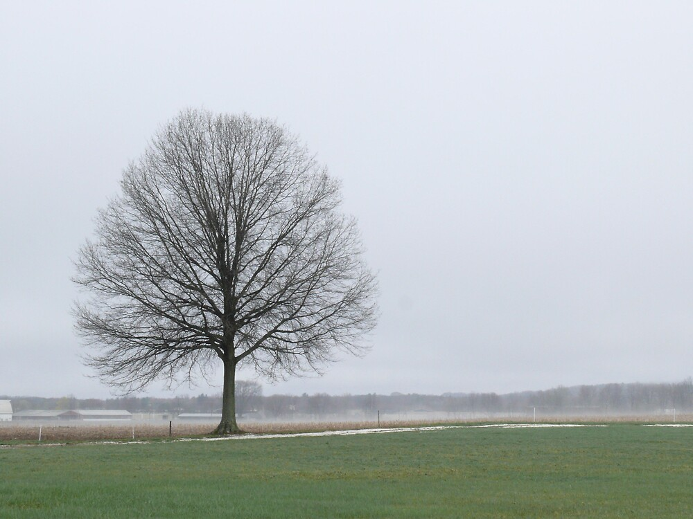 spring fog with my favorite tree by Nina Andrews