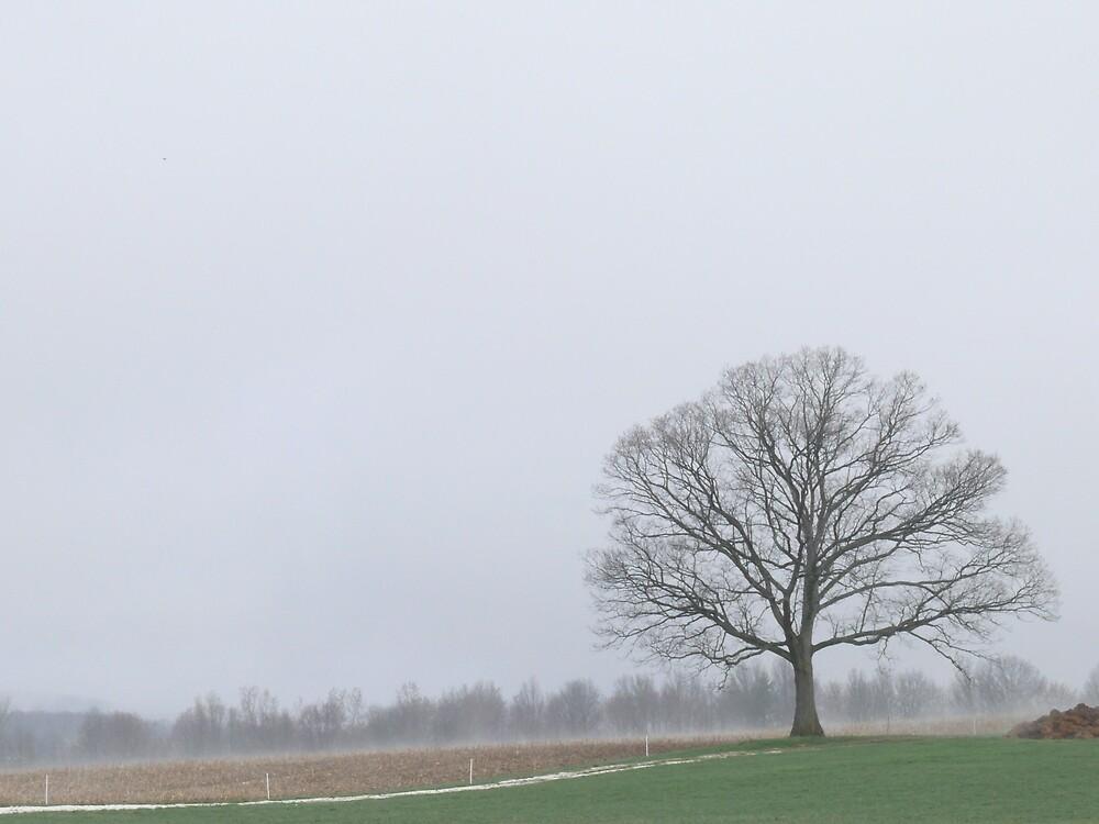 Misty spring morning by Nina Andrews