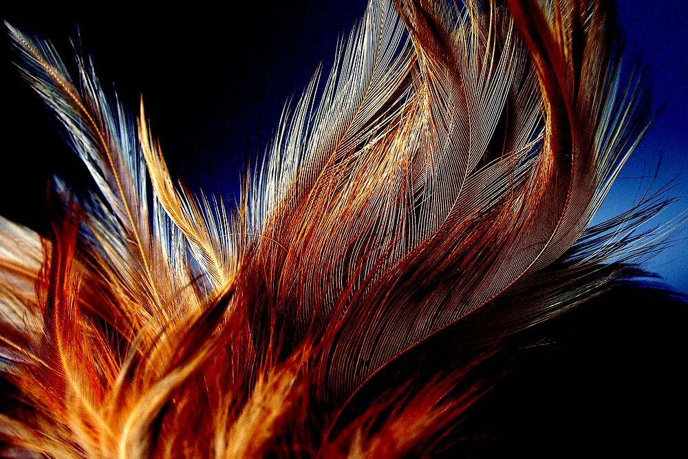 Honey Dust Feathers by Jef Harris