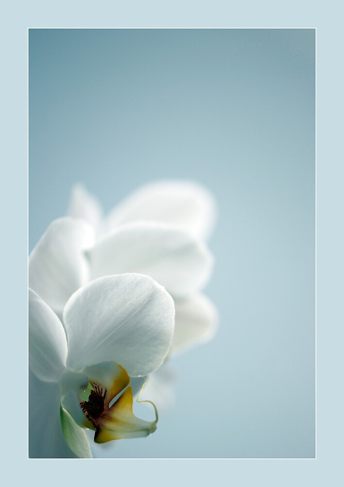 orchid by narabia