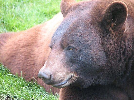 Brown bear by carpenter777