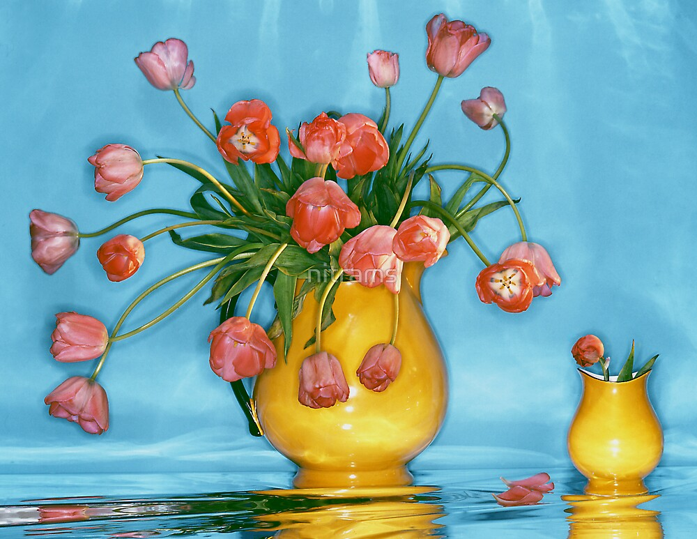 Pink tulips in yellow vase by nitrams