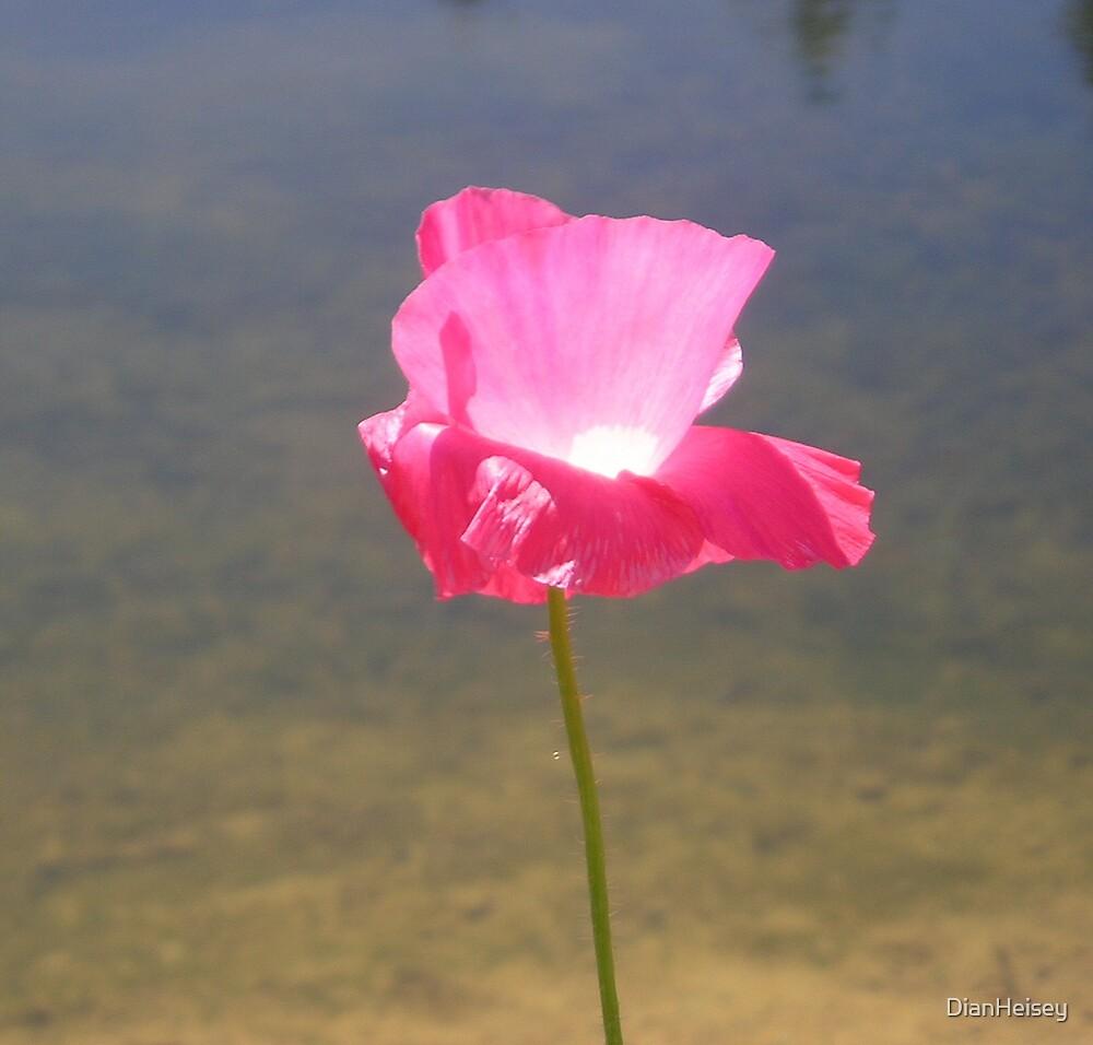 Pink Wildflower by DianHeisey