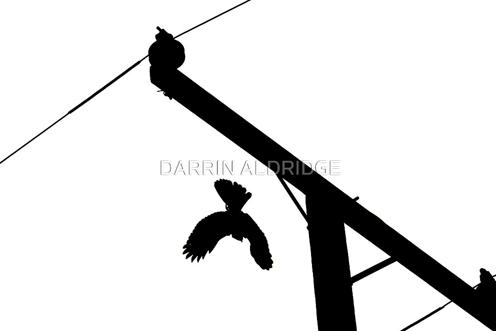 Black Hawk Down by DARRIN ALDRIDGE