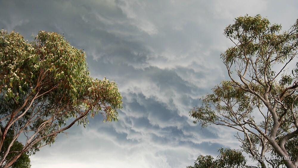 Bush Storm by MagnusAgren