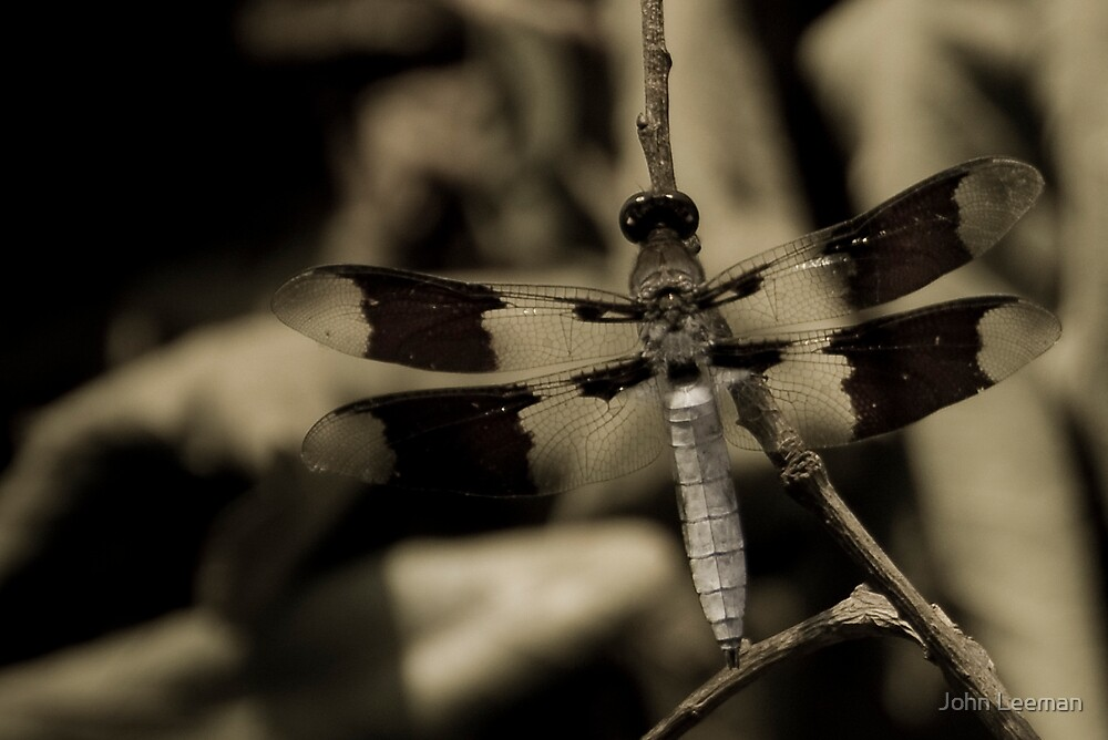 Dragon Fly by John Leeman