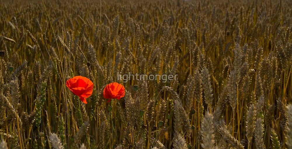 Poppy's at Harvest by lightmonger