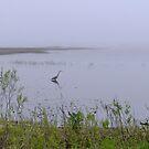 Big Bird by wenze1