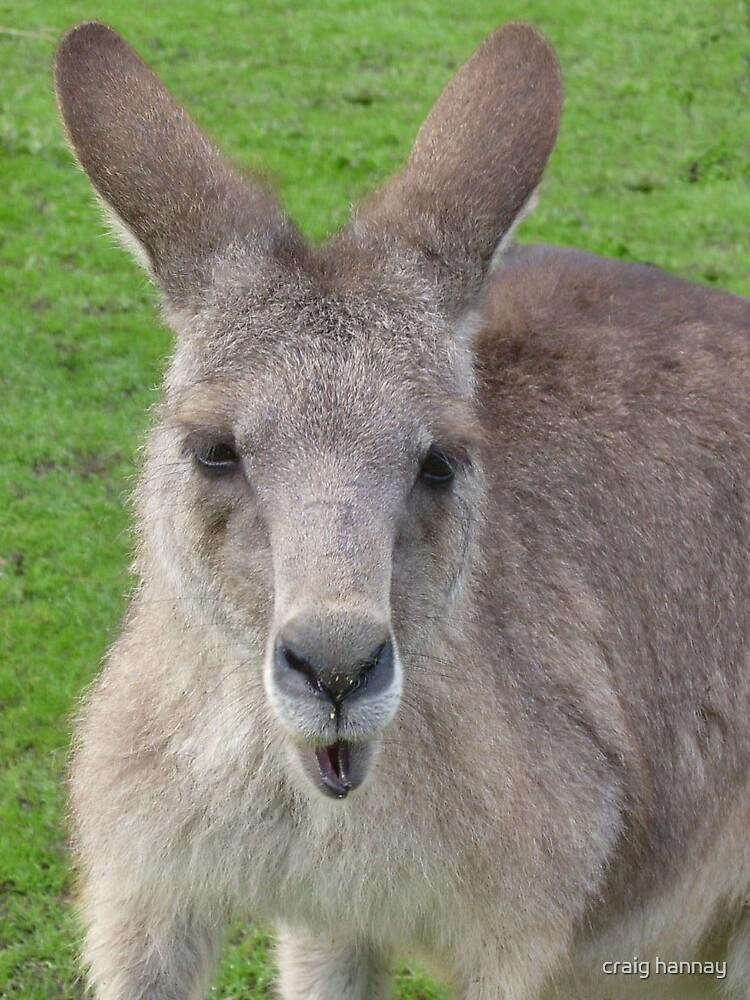 kangaroo by craig hannay